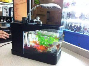 Bể cá phong thủy mini mang đến cho bạn một không gian thoải mái