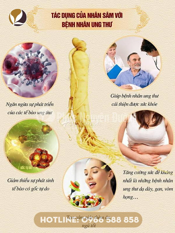 Những công dụng của nhân sâm đối với sức khỏe mọi người