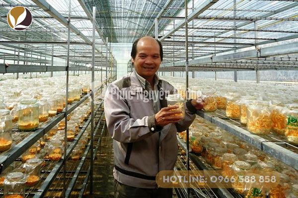 Đông trùng thảo được nuôi trồng ở Việt Nam