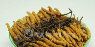 Tác dụng của đông trùng hạ thảo